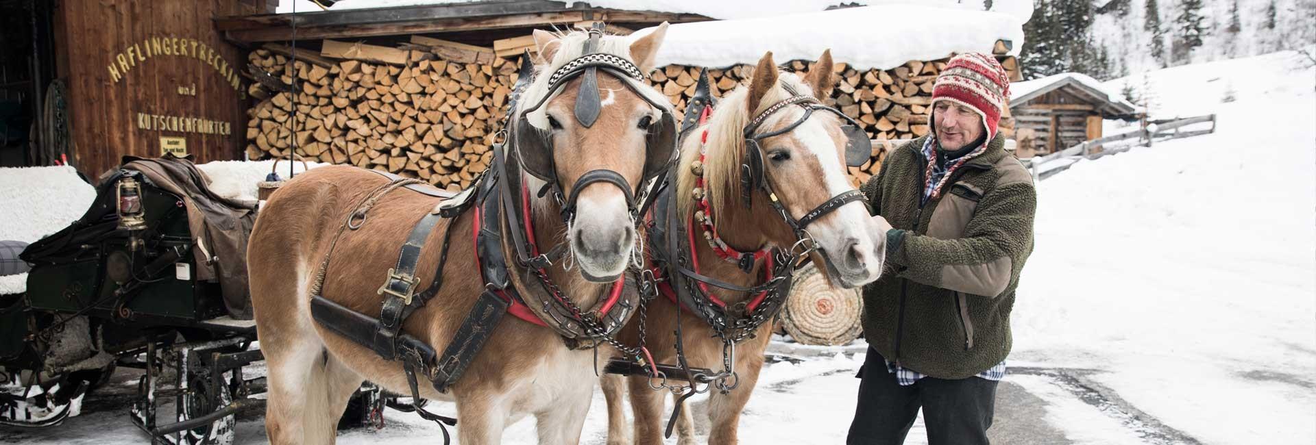 pferdeschlittenfahrten_pitztal